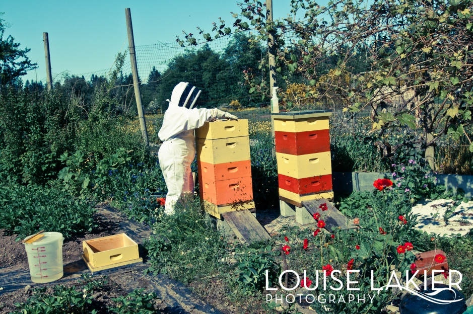 Bees, Farms, Vegetable Garden, Honey, Beekeeper, Hives