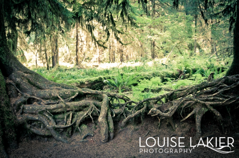 Portrait of a Tree, Olympic Peninsula, Olympic National Forest, Washington, Trails, Hall of Mosses