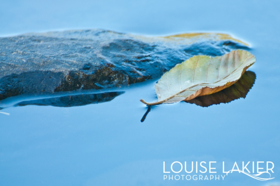 Motel Del Rogue, Grants Pass, Oregon, The Rogue River, Reflections, Nature, Stars, Fall, Pacific Northwest, Fallen Leaves