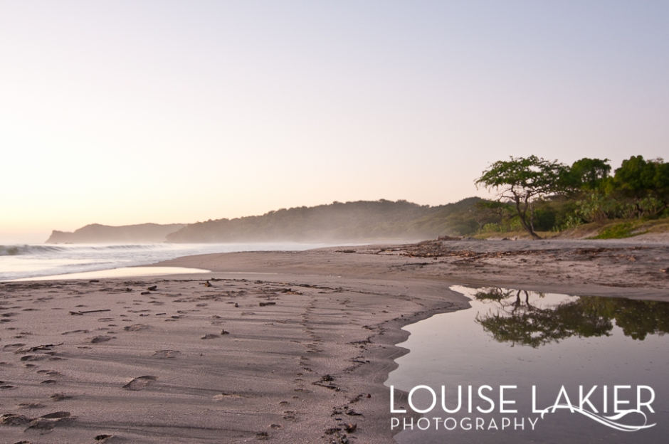 Portrait of a Tree, Nicaragua, Beach Tree, El Gigante, Central America, Travel Photography
