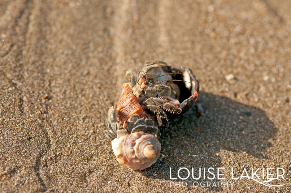 Hermit Crabs, Crabs, Shells, Beach, Nicaragua, El Gigante, Wildlife, Travel, Central America