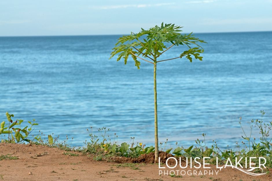 Papaya Tree, Playa Gigante, Project Woo, Nicaragua, El Gigante, Central America, Travel Photography