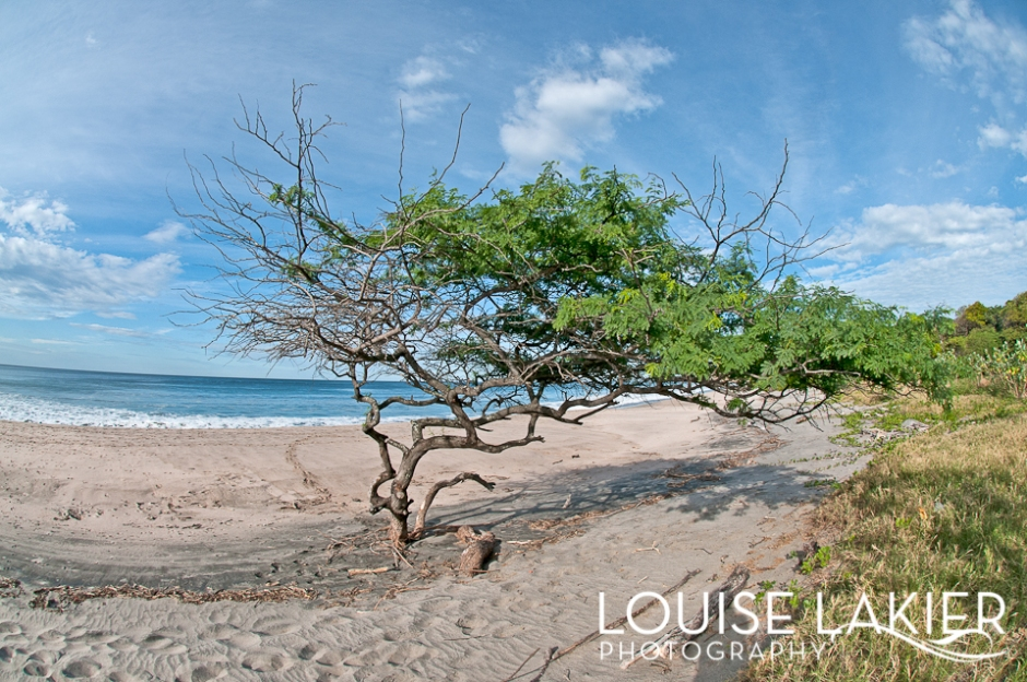 Beach Tree, El Gigante, Nicaragua, Central America, Portrait of a Tree, Travel Photography