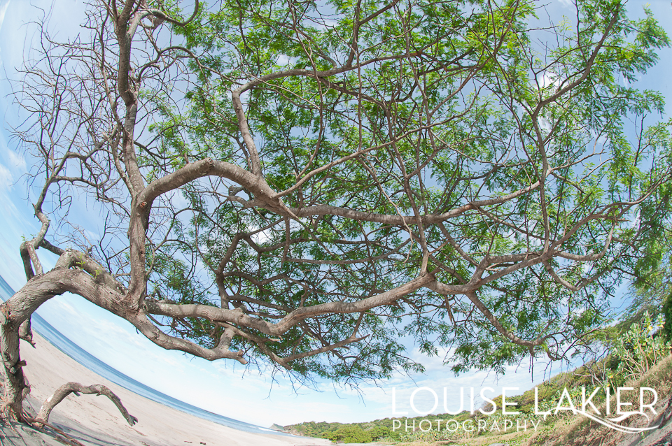 El Gigante, Nicaragua, Central America, Travel Photography, Portrait of a Tree, Nature, Beaches