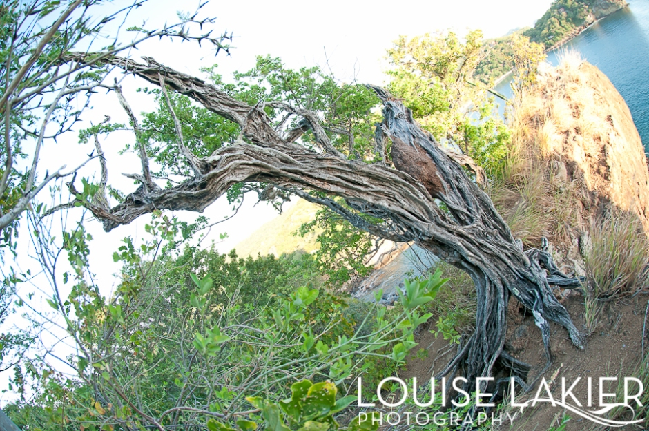 Old, Wicked, Tendons, Twisted, Fisheye, Nature, Portrait of a Tree, Cliffhanger, Point, Rooted, Nicaragua, El Gigante