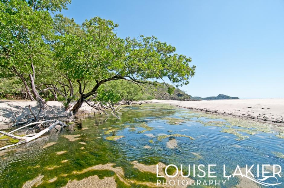 Portrait of a Tree, Brasil, Nicaragua, Tree, Estuary, Colorado Beach, Giant's Foot, El Gigante, Nature, Travel Photography, Flora, Central America