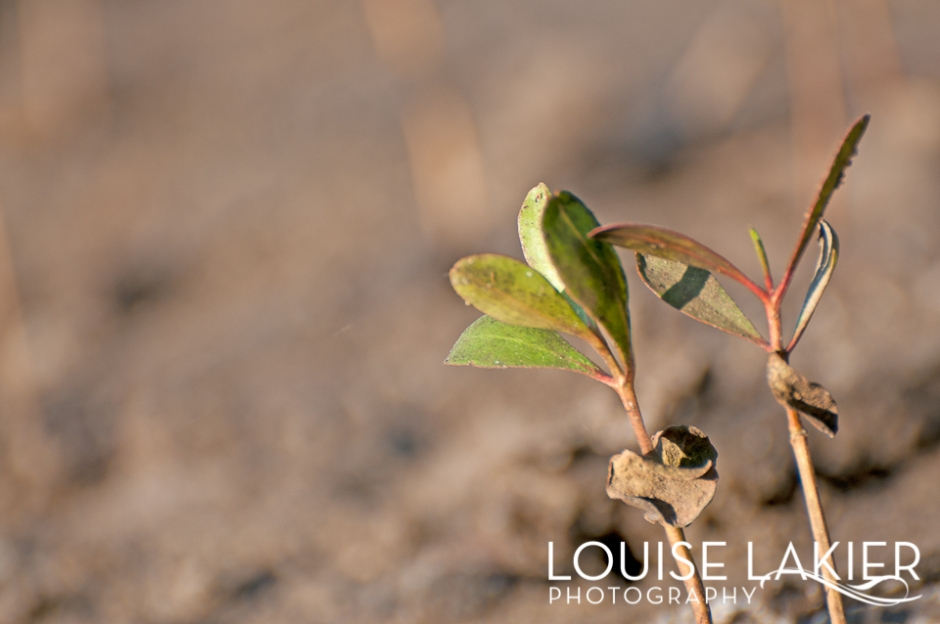Sprouts, Seedlings, Playa Amarillo, New LIfe, Plantlings, Nicaragua, Trees, Portrait of a Tree