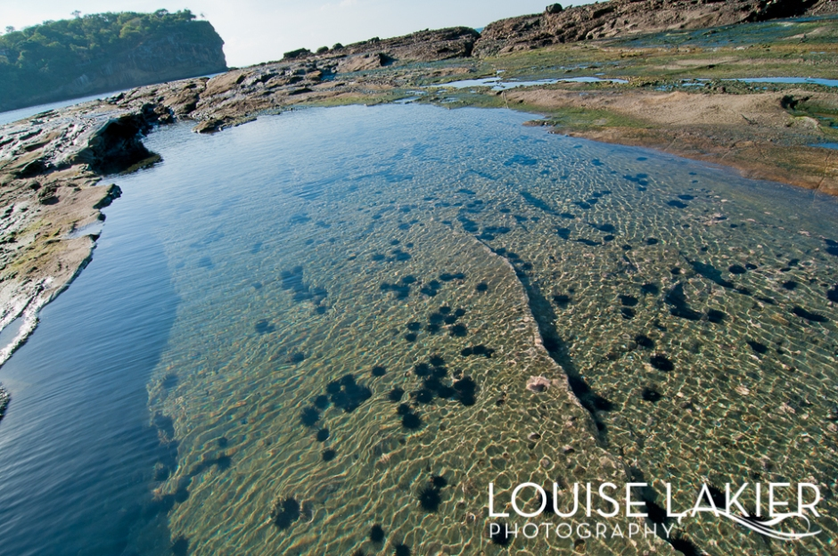 Tidal Pools, Sea Urchins, Redondo Bay, El Gigante, Sea Life, Nicaragua, Wildlife Photography, Travel Photography