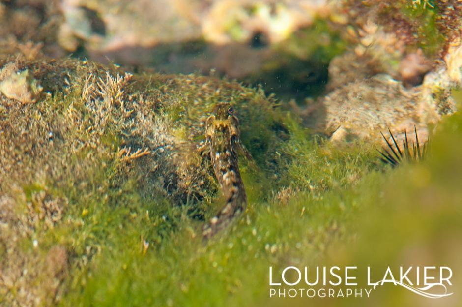 Frog Fish, Tidal Pools, Redondo Bay, Sea Life, Wildlife Photography, Travel Photograpy, Redondo Bay, Nicaragua