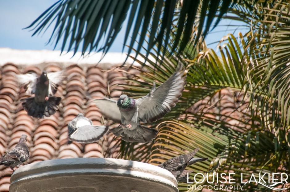 Birdbath, Birds, Granada, Nicaragua, Bathing, Flying, Pigeons, Doves, Fountain, Water, Splashing, Wildlife, City, Nature, Central America
