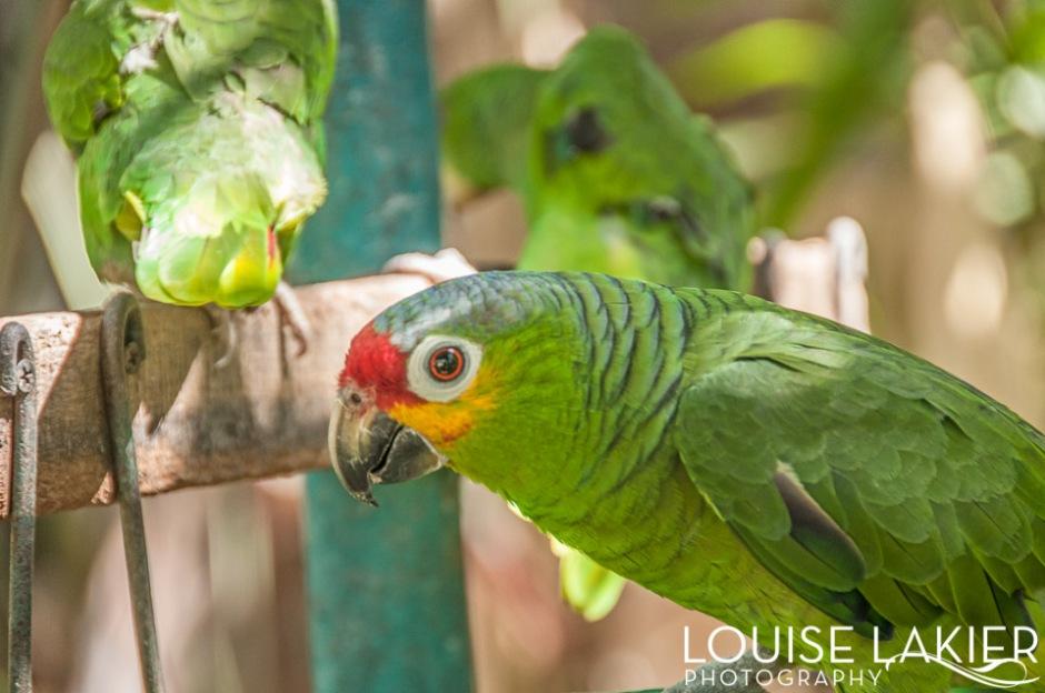 La Floresta, Granada, Parrots, In The Garden, Love Bite, Birds, Nature, Green