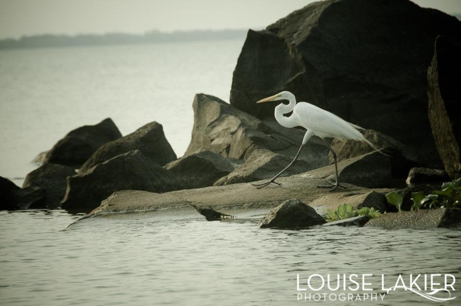 The Dark Stork Series, Stork, Nature, Birds, The Isletas, Granada, Nicaragua, Travel Photography, Contrast, White, Grace, Lake Nicaragua