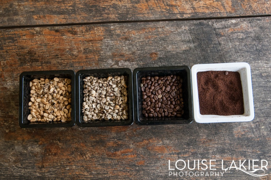 The four stages of coffee harvesting at Cafe Las Flores