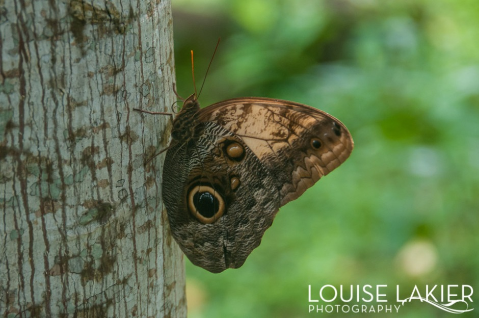 A moth on Ometepe Island caught my eye