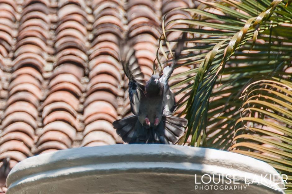 Pigeons at the Dario Hotel